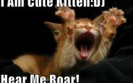Extreme Funny Cats 15 High Resolution Wallpaper