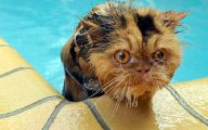 Extreme Funny Cats 16 Cool Hd Wallpaper