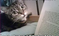 Extreme Funny Cats 17 Hd Wallpaper