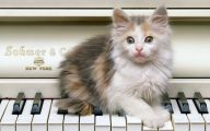Extreme Funny Cats 4 Cool Hd Wallpaper