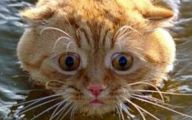 Extreme Funny Cats 7 Cool Hd Wallpaper