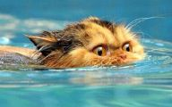 Extreme Funny Cats 8 Background Wallpaper