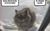 Extreme Funny Cats 9 High Resolution Wallpaper