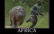 Funny African Animals 1 Widescreen Wallpaper