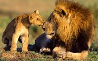 Funny African Animals 15 Free Hd Wallpaper