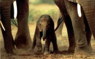 Funny African Animals 17 Background