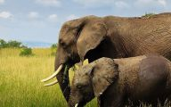 Funny African Animals 19 Free Hd Wallpaper