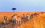 Funny African Animals 20 Cool Hd Wallpaper