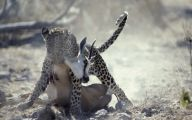 Funny African Animals 22 Background