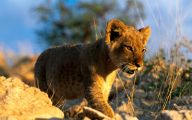 Funny African Animals 23 Cool Hd Wallpaper
