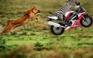Funny African Animals 27 Cool Hd Wallpaper