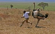 Funny African Animals 3 Cool Hd Wallpaper