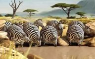Funny African Animals 41 Free Hd Wallpaper