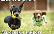 Funny And Crazy Dogs 1 Cool Wallpaper