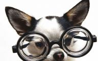 Funny And Crazy Dogs 16 Free Wallpaper