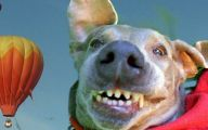 Funny And Crazy Dogs 31 Widescreen Wallpaper