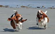 Funny And Crazy Dogs 32 Cool Wallpaper