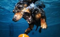 Funny And Crazy Dogs 36 Free Hd Wallpaper