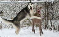 Funny And Crazy Dogs 41 Cool Hd Wallpaper