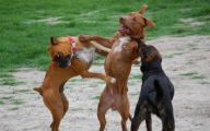 Funny And Crazy Dogs 8 Cool Wallpaper