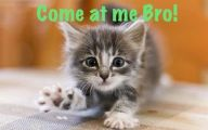 Funny And Cute Animals 22 Widescreen Wallpaper
