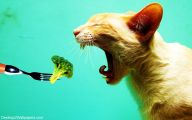 Funny And Cute Animals 34 Wide Wallpaper