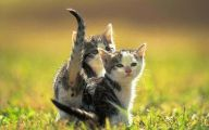 Funny And Cute Animals 35 Desktop Background