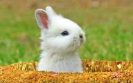 Funny And Cute Animals 38 Widescreen Wallpaper