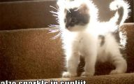 Funny And Cute Cat Pictures 10 Cool Wallpaper