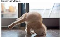 Funny And Cute Cat Pictures 13 Wide Wallpaper