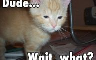 Funny And Cute Cat Pictures 20 Free Hd Wallpaper