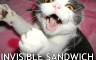 Funny And Cute Cat Pictures 23 Cool Hd Wallpaper