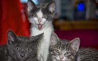 Funny And Cute Cat Pictures 26 Wide Wallpaper