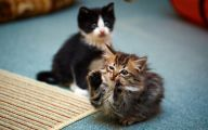 Funny And Cute Cat Pictures 27 Wide Wallpaper