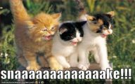 Funny And Cute Cat Pictures 31 Cool Hd Wallpaper
