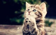 Funny And Cute Cat Pictures 32 Cool Hd Wallpaper