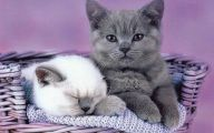 Funny And Cute Cat Pictures 6 Cool Wallpaper