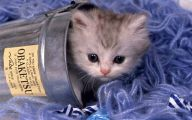 Funny And Cute Cats 14 Free Wallpaper