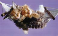 Funny And Cute Cats 16 Background Wallpaper