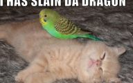 Funny And Cute Cats 18 Free Wallpaper