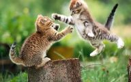 Funny And Cute Cats 20 Widescreen Wallpaper