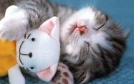 Funny And Cute Cats 22 Cool Wallpaper