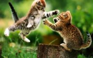 Funny And Cute Cats 6 Widescreen Wallpaper