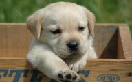 Funny And Cute Dog Pictures 35 Widescreen Wallpaper