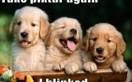 Funny And Cute Dog Pictures 37 Widescreen Wallpaper