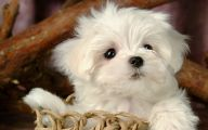 Funny And Cute Dog Pictures 38 High Resolution Wallpaper