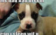 Funny And Cute Dog Pictures 43 High Resolution Wallpaper