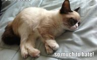 Funny Angry Cats 10 Cool Wallpaper