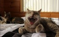 Funny Angry Cats 12 Wide Wallpaper