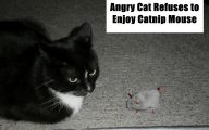 Funny Angry Cats 15 Cool Hd Wallpaper
